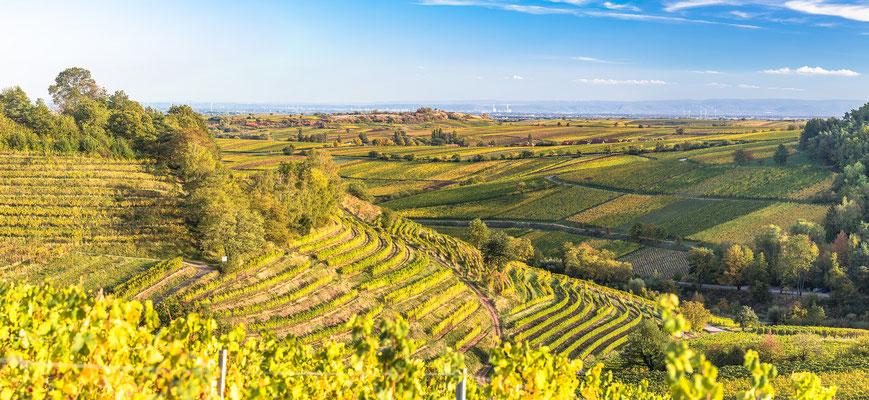 Blick über die Weinberge bei Birkweiler