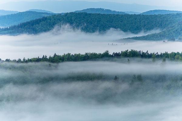 Nebelbänke über dem Pfälzerwald