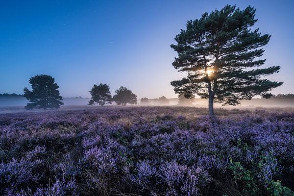 Mehlinger Heide im Vollmondlicht