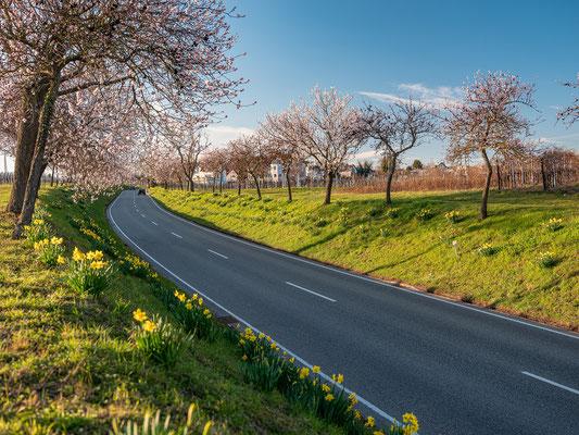 Frühling in Nussdorf