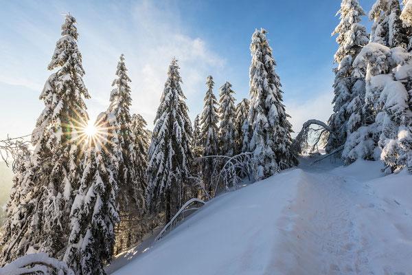 Wintermorgen an der Hornisgrinde