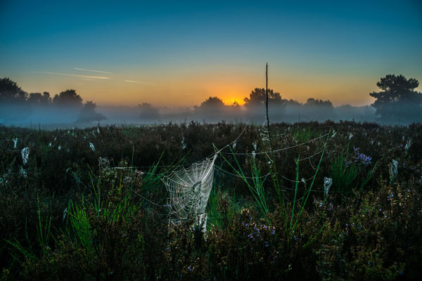 Taugeschwängertes Spinnennetz in der Mehlinger Heide