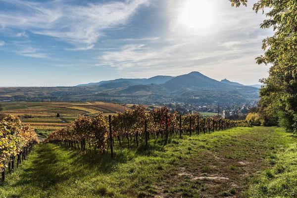 Wunderbarer Ausblick auf die Weinberge und den Trifels