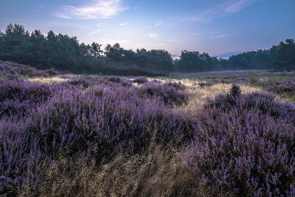Zarter Morgendunst über der Mehlinger Heide