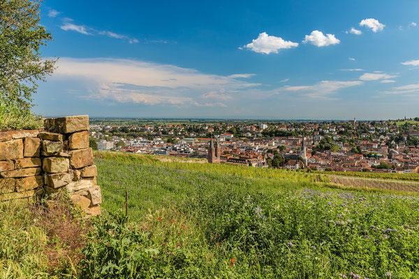 Sommer über Neustadt, 60 x 40 cm, Alu-Dibond, Rückseitige Hängung mit Auminiumschiene, 100 €