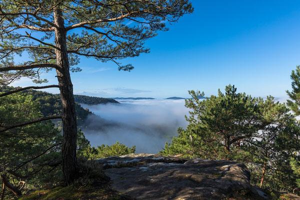 Nebelstimmung im Bärenbrunnertal