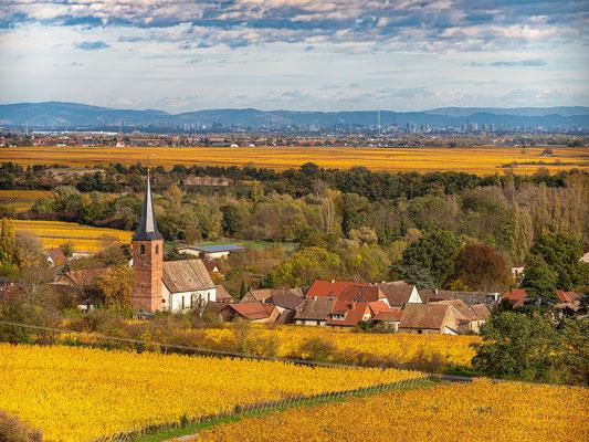 Golden gefärbte Weinberge bei Forst