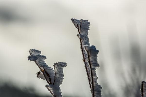 Raureif im Wind