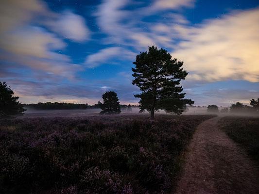 Nachts in der Mehlinger Heide