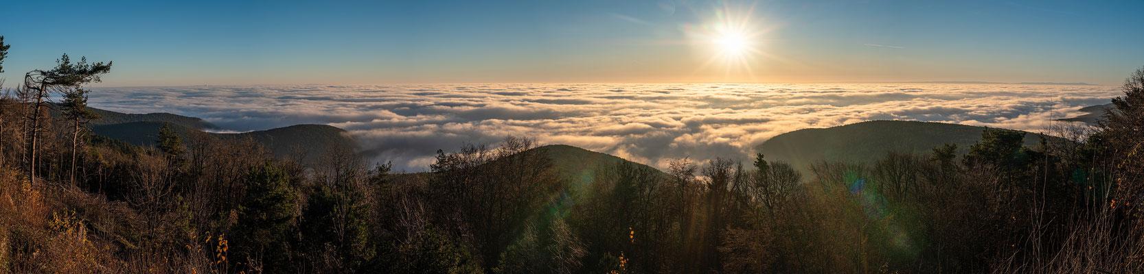 Nebelmorgen auf der Kalmit