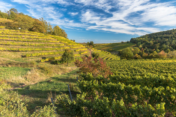 Weinlage Kastanienbusch im Herbst