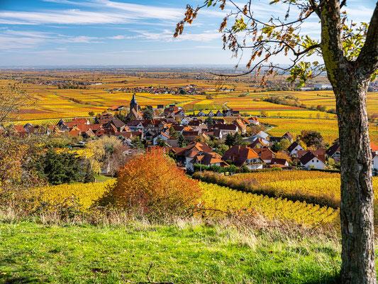 Goldener Herbst bei Burrweiler