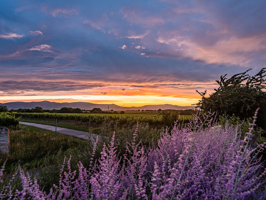 Sonnenuntergang bei Duttweiler