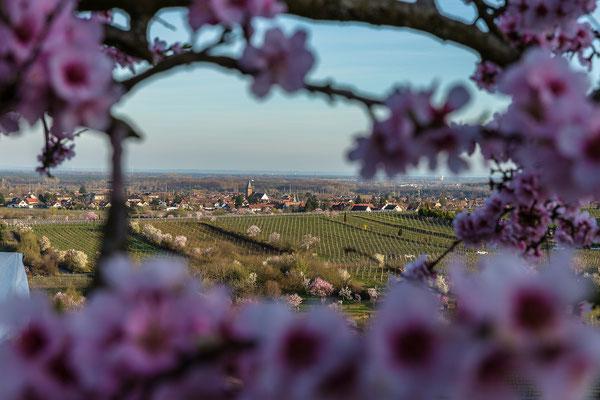 Blick auf das Dorf Mussbach