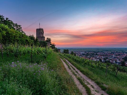 Früher Sommermorgen an der Wachtenburg