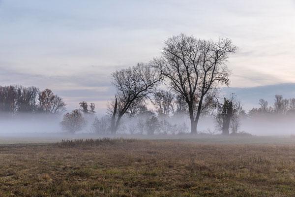 Herbstmorgen in den Lochbuschwiesen