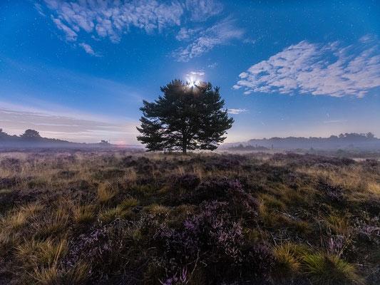 Mondnacht in der Mehlinger Heide