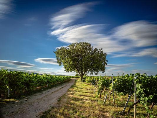 Wolkenspiel in den Weinbergen bei Duttweiler