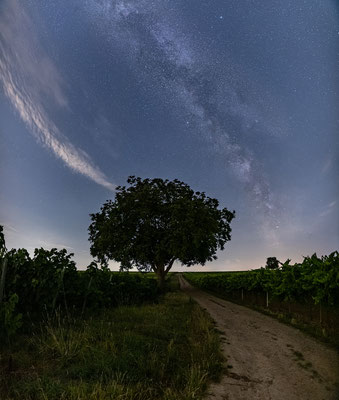 Die Milchstraße in den Weinbergen bei Duttweiler
