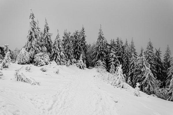 Winter auf der Hornisgrinde