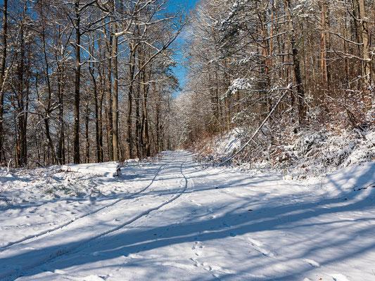 Winterwald bei Annweiler