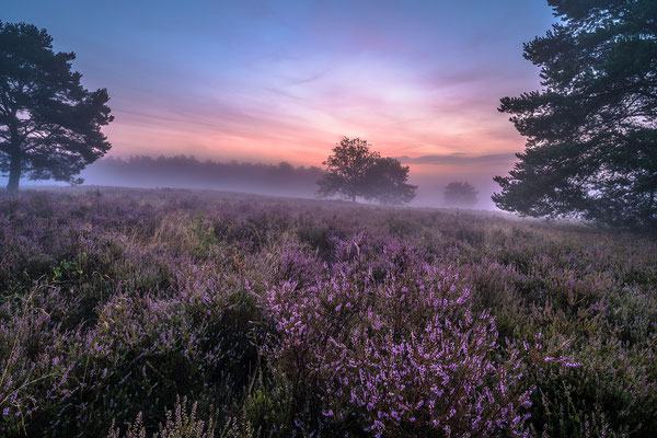 Mehlinger Heide im Morgennebel