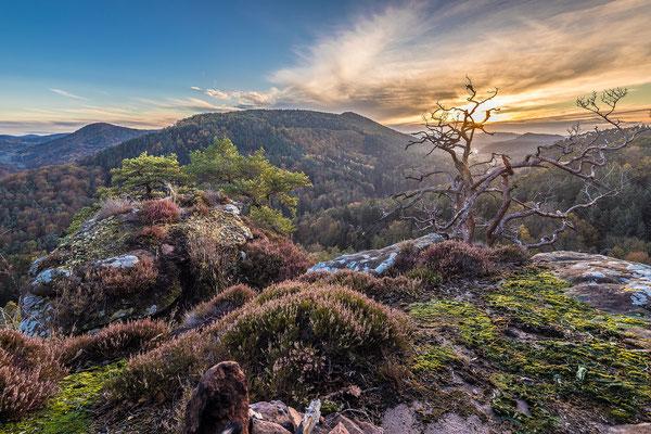 Abendstimmung auf einem Fels im Pfälzerwald