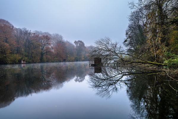 Herbstmorgen am Jockgrimer Altrhein