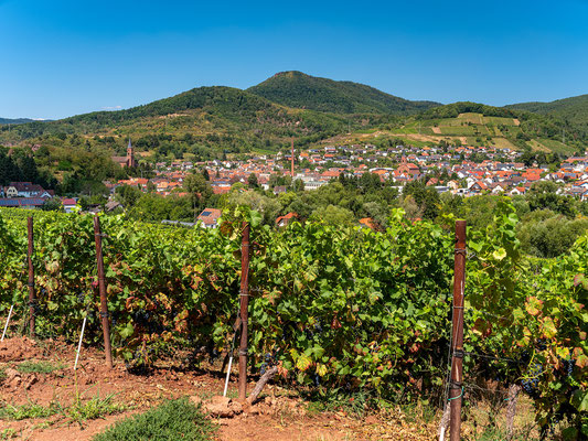 Blick auf Albersweiler