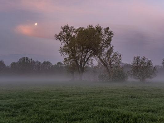Morgennebel bei den Geinsheimer Wiesen