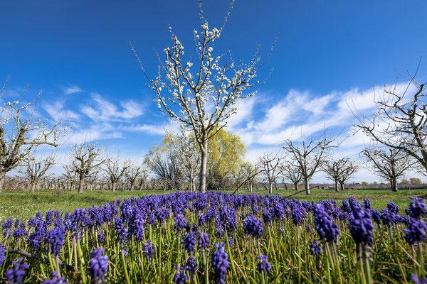 Frühlingsstimmung bei Freinsheim