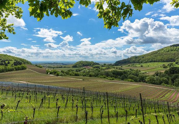 Die Weinberge von Ranschbach