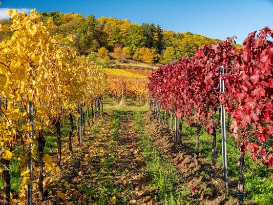 Goldener Herbst bei Sankt Martin