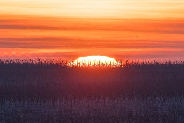 Sonnenaufgang bei Duttweiler
