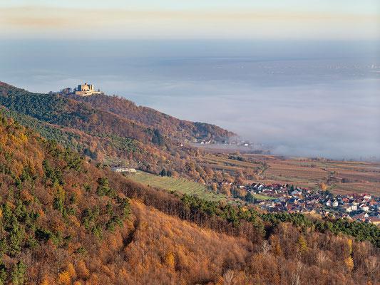 Nebelmorgen auf der Rietburg
