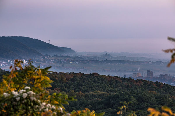 Blick auf Neustadt, Königsbach und Gimmeldingen