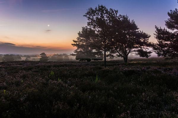 Mondaufgang in der Mehlinger Heide