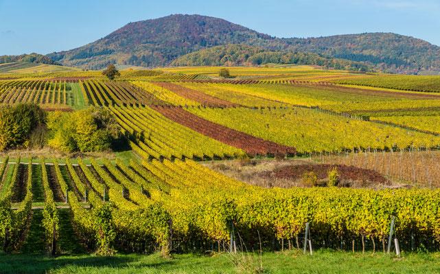 Herbstliche Weinberge