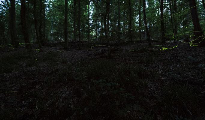 Glühwürmchen in der Nähe des Eiswoogs