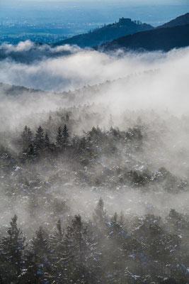 Winter im Wald, Frühling am Schloss