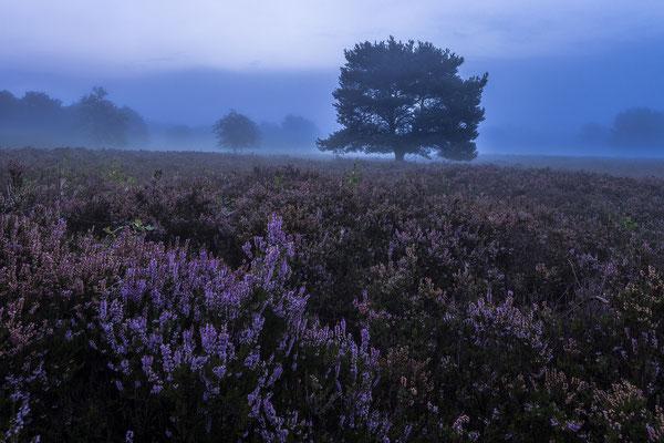 Frühmorgens in der Mehlinger Heide