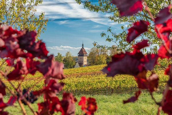 Herbst am Geilweilerhof bei Siebeldingen