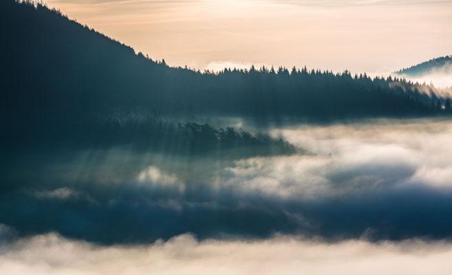 Nebelstimmungen im Gegenlicht