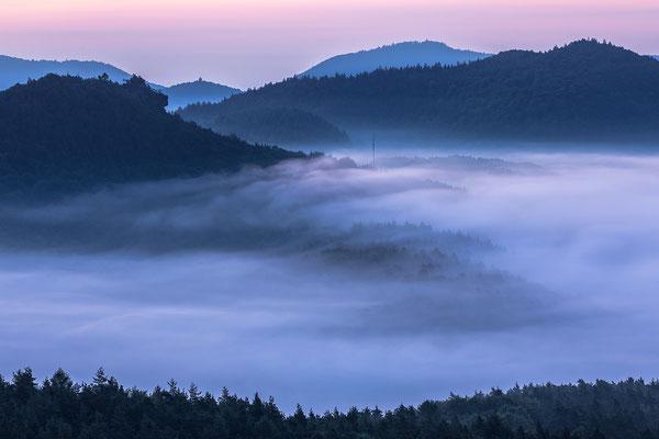 Blick über den nebligen Pfälzerwald