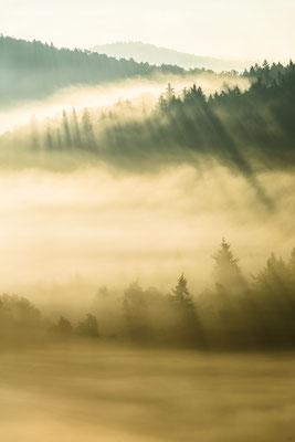 Nebelstimmung im Gegenlicht