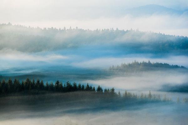 Nebliger Pfälzerwald