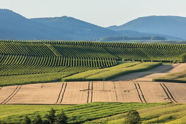 Sommer in der Südpfalz