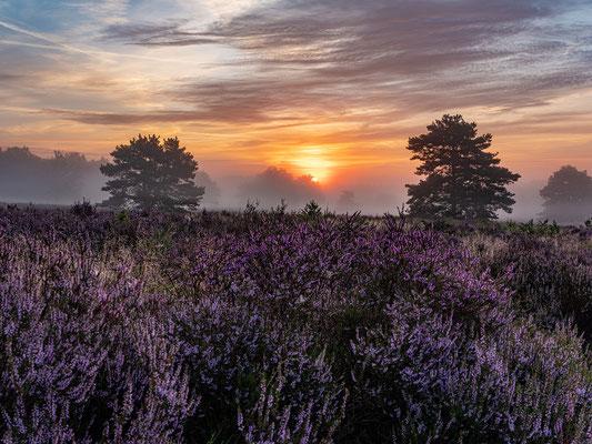 Toller Morgen in der Mehlinger Heide