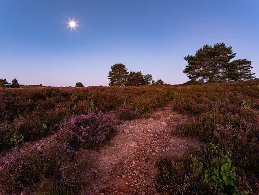 Dämmerung und Mondlicht in der Mehlinger Heide