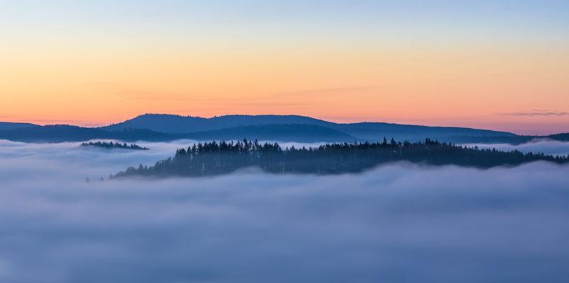 Morgennebel über dem Pfälzerwald
